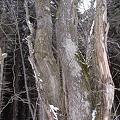 森のさんぽ  DSC02440