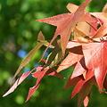 写真: 秋色‥♪