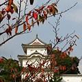 写真: 秋景色‥♪