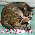 Photos: 090703-きょうのチビらぶ