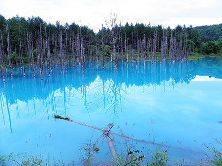 美瑛の青い池高画質壁紙です。