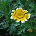 写真: クイズ:この花、何の花?