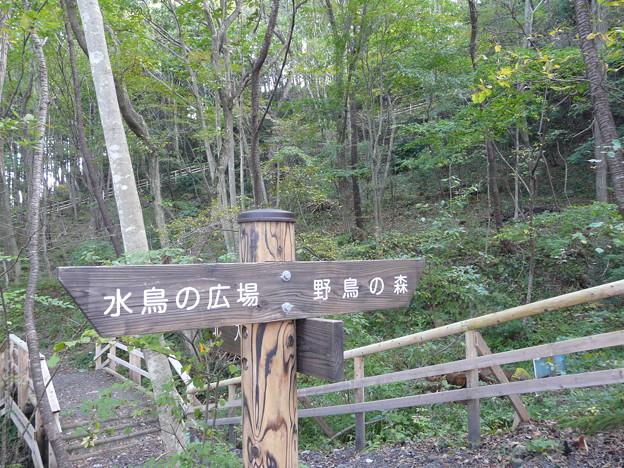 写真: 長命館公園3