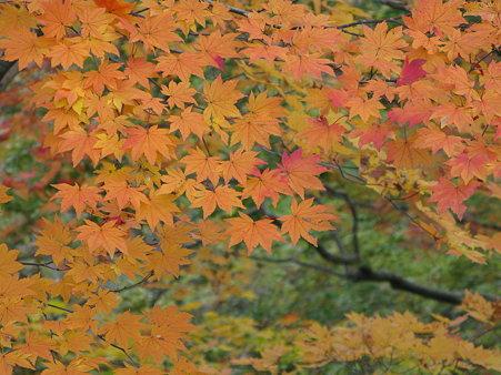 鳴子峡の秋につつまれて 2〜色いろいろいろ