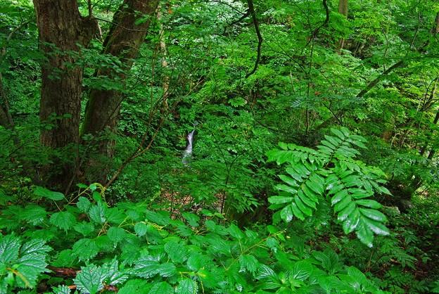 雨に濡れる深緑の沢