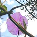 写真: 朝顔と見た寒空 2009.11.3