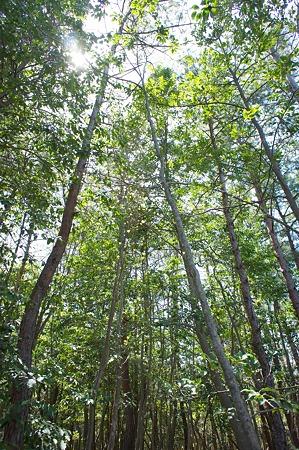 trees04202011nex5