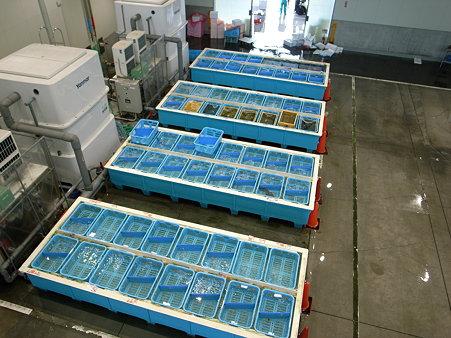 沼津魚市場の沼津港水産複合施設INO(イーノ)のいけす