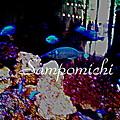写真: Sampomichi