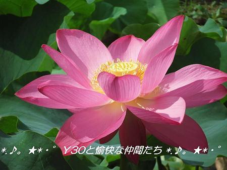 DSCF0048_pa