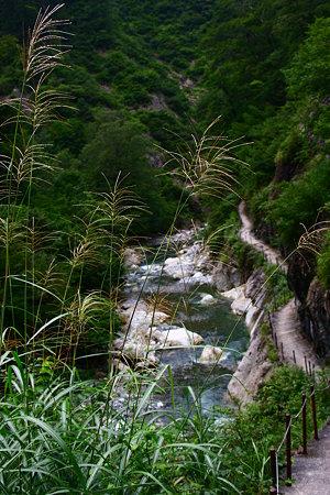 姥ヶ滝への遊歩道でススキ (蛇谷川)