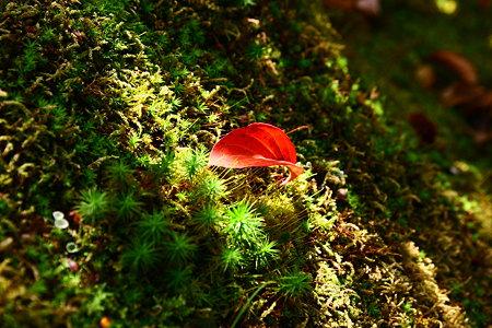 落ち葉(2)  木漏れ日の中で!