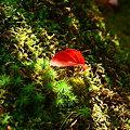 写真: 落ち葉(2)  木漏れ日の中で!