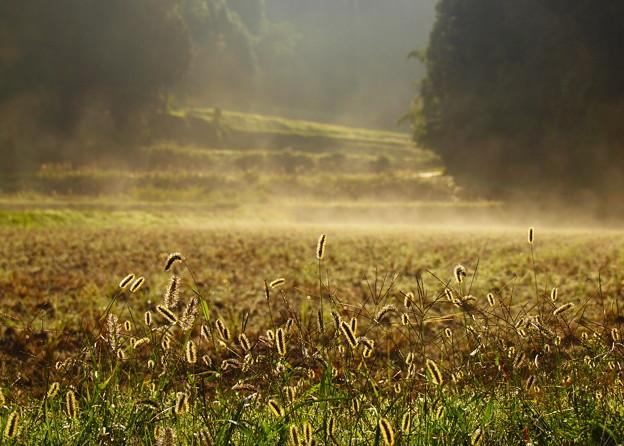 収穫後の眺め