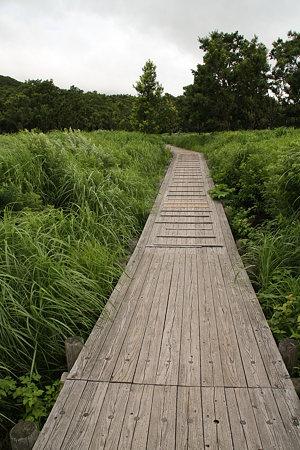 湿原の遊歩道