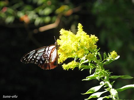 光る花光る羽