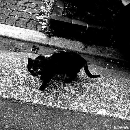 黒猫に遭った