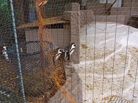20110522 天王寺 路地裏ペンギン01