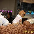Photos: ソファの上で・・・2