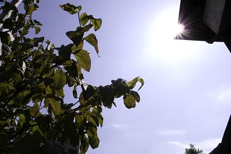 2009-09-25の空1