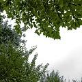 Photos: 2009-10-24の空