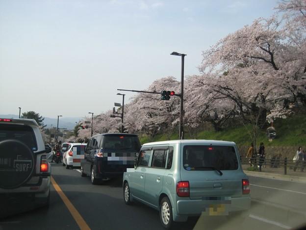 写真: 20110410_sakura5_keage