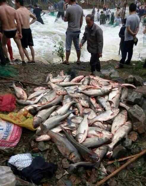 豪快な魚獲り&でかすぎる魚さん達(笑) (12)