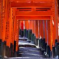 写真: 京都-稲荷大社