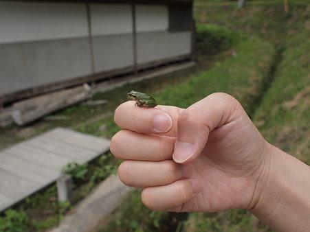 大内宿の蛙