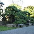 Photos: 三百年の松