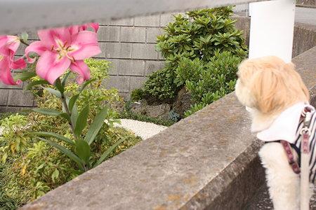 お花とくるみ1