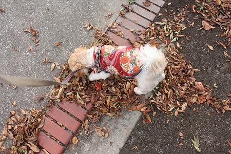 落ち葉が好き1