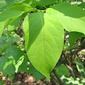 Photos: 森の葉っぱ