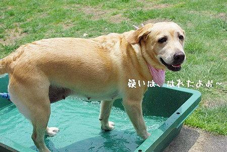 s-myu2009_0627(006)