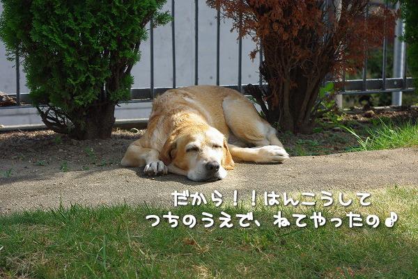 s-myu2009_0831(006)