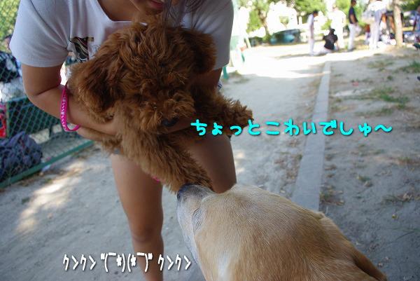 s-myu2009_0906(047)