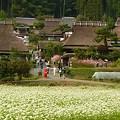 写真: 茅葺と蕎麦の花♪
