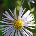 Aster 9-5-09