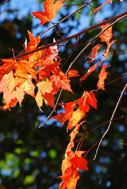 Photos: Orange and Green 10-10-09
