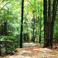 Photos: Trail1 10-10-09