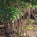 Photos: 4-11-09 Mangrove