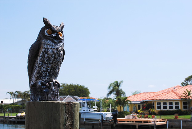 Photos: 4-13-09 Owl in FL