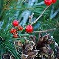 Photos: Seasons Greetings 2011