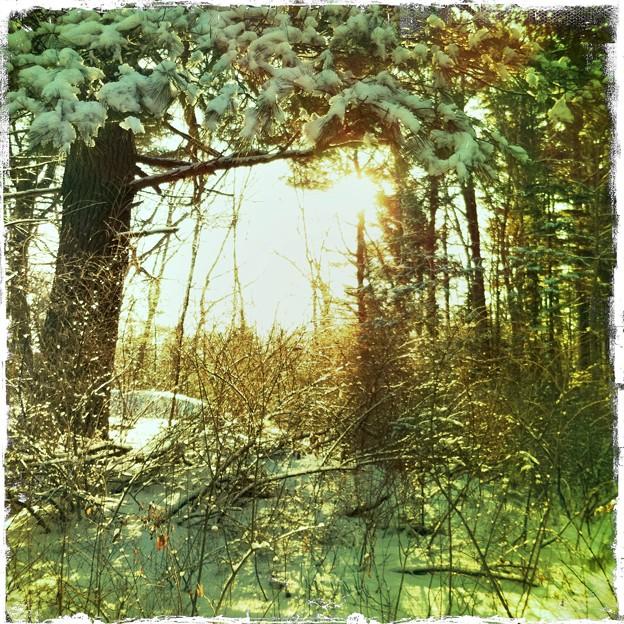 写真: Show on the Pine Tree