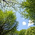 続・新緑の季節