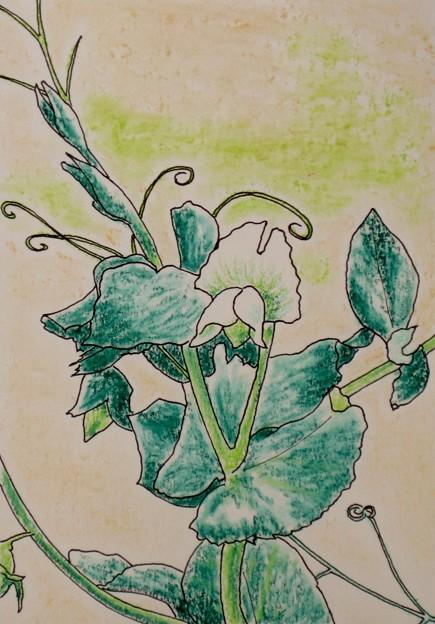 人おらぬときには踊り豆の花