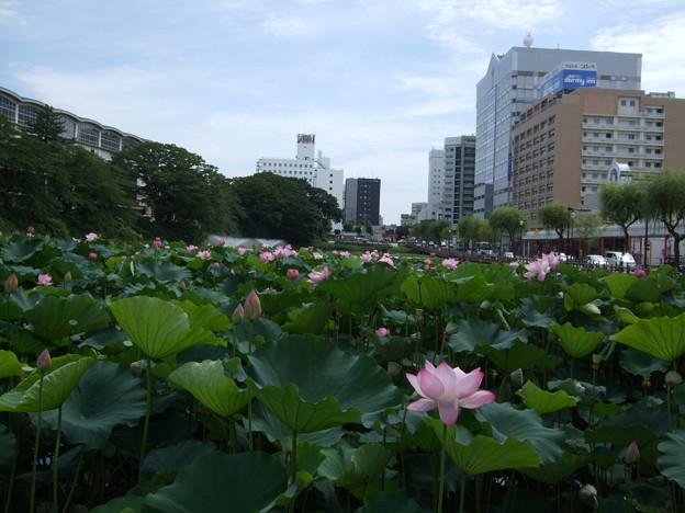 Photos: 秋田 千秋公園