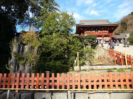 101210-八幡さま (8)