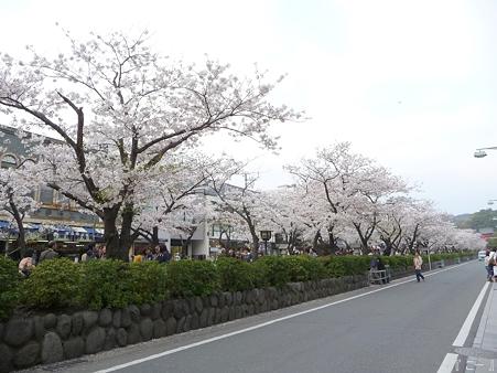 110411-鎌倉 段葛 (24)