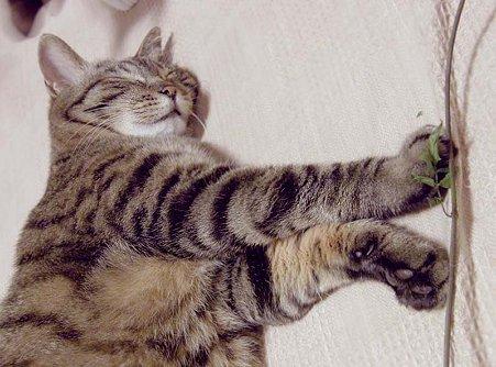 猫,ネコ,ねこ,昼寝,ひる寝,のんびり